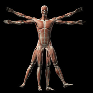 Deer Antler Plus Muscle Building And Recovery Mensbeat